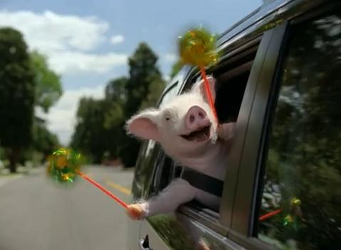 Geico Pig Commercial Buying A Car